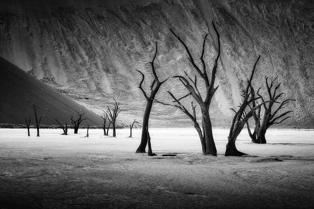 AFR - desert 5 20160318.jpg