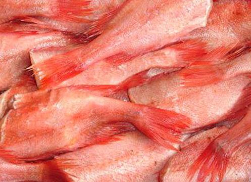 Red-Fish Islândia 300/500