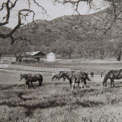 Conejo Valley History