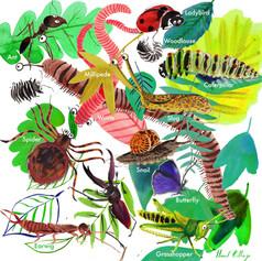 bugs to spot.jpg