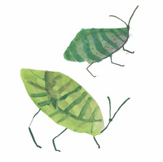 leaf insects.jpg