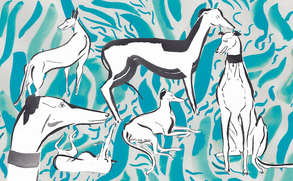 Doodle a Poodle Greyhound spread.jpg