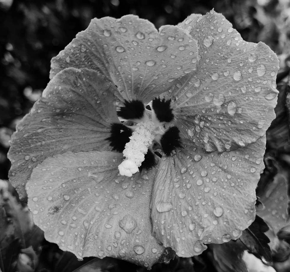 Blüte.jpg