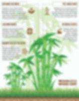 benefits-of-bamboo.jpg
