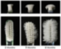 Scientific rsearch showing wear and tear of nylon bristles