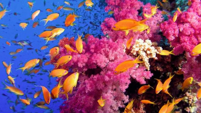 beautiful corals with lots of healthy fish life, Phi Phi Island's