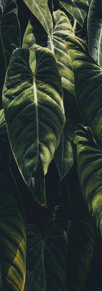Les feuilles tropicales