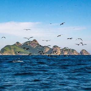 Ilha Principal do Arquipelago dos Alcatrazes, e fragatas voando. 2017