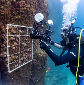 """mergulhador fazendo fotos para pesquisa usando a técnica de """"foto quadrados"""" para o monitoramento de Alcatrazes. 2017"""