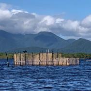 Encontro das comunidades tradicionais da Ilha do Cardoso