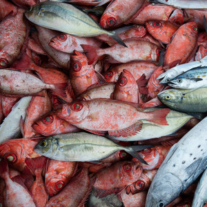 Baía da Ilha Grande – pescado na praia de Ponta Negra