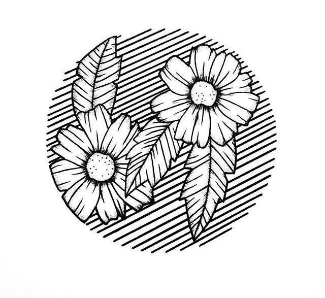 Flowers & Lines