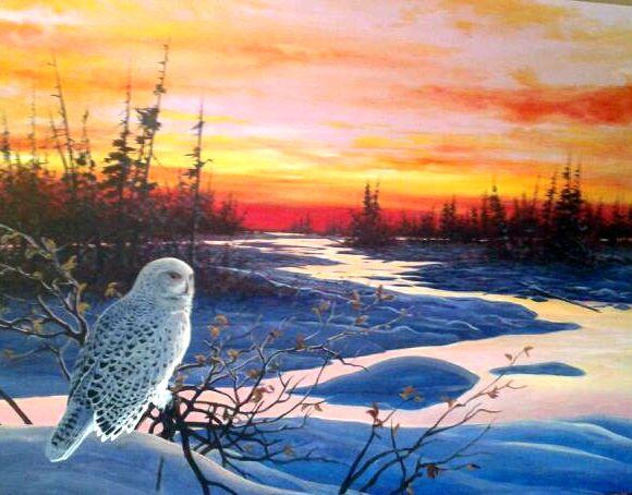 RayShaw_Owl