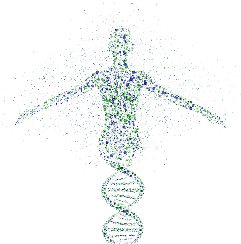 Swami genotype
