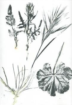 plantes2.jpg