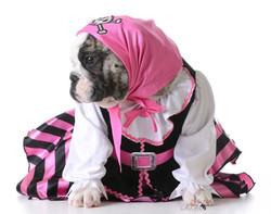 Pelee Bulldogs | Champion Bulldog Breeder Ontario Canada | Marshall BOB