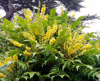 Tropical Scents in a Nottinghamshire Winter