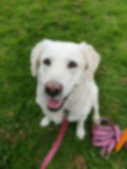 DFC Dog Training Pinky White Law.jpg