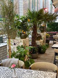 Restaurant Plants by Giraffe Flowers
