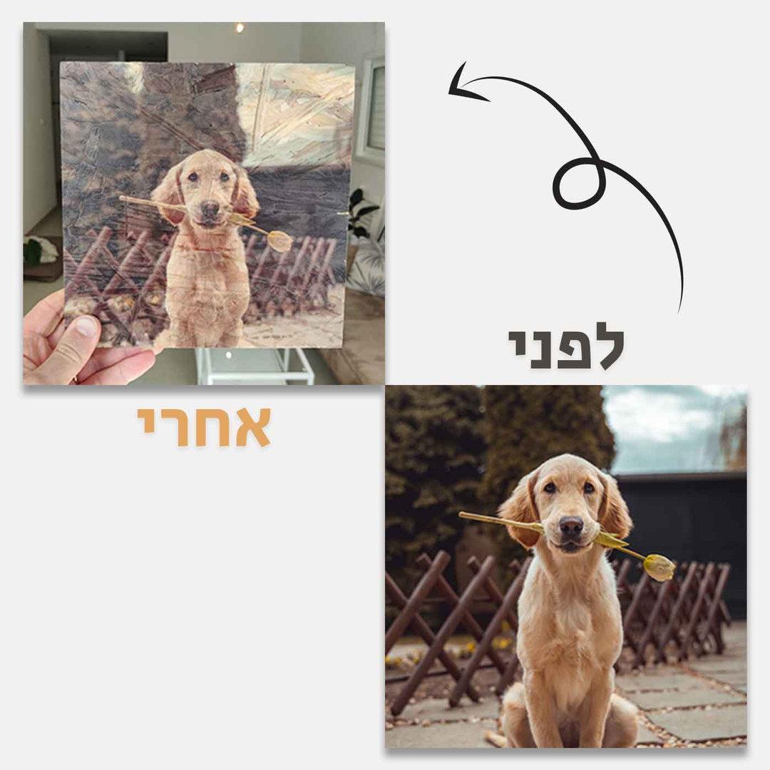 כלב-לפני-ואחרי.jpg