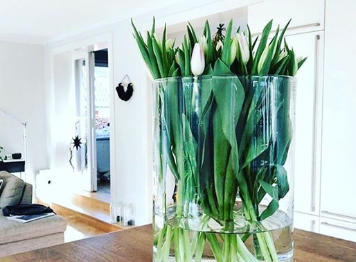 tips for tulips  🌷