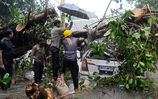 A tree fell on a car