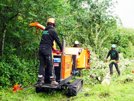 Choosing the right tree surgeon | What to look for