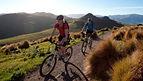 マウンテンバイク ノースカンタベリー ニュージーランド トレイル ワールドクラス