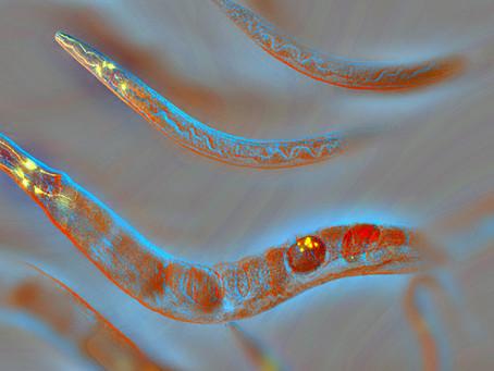 NAD + aktywuje białka i połączenia komórkowe, aby wspierać dłuższe życie.