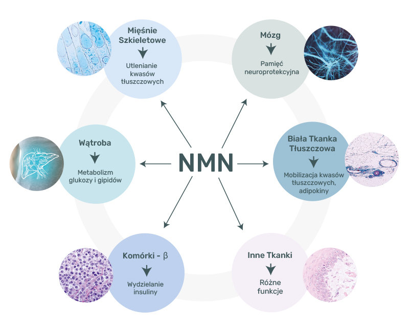 nmn_connected_graph.jpg