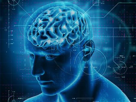 Suplementacja MNM promuje odmładzanie naczyń krwionośnych mózgu.