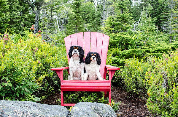 Loud and Slow - Wesley and Lily the King Charles Cavaliers