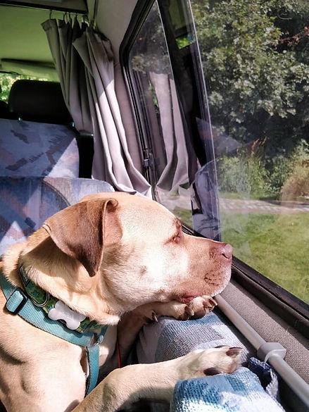 EXP52-Mudd&Knobblies-Campervan Dog.jpg