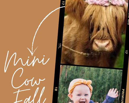 Mini Cow Fall Minis