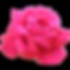 rose04.png