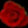 rose12.png
