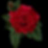 rose09.png