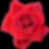 rose06.png