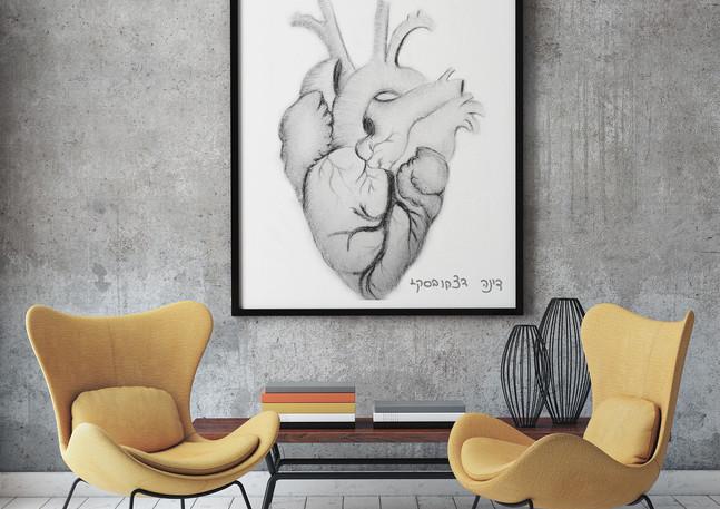 דינה דצקובסקי | רישום | הלב האנטומי
