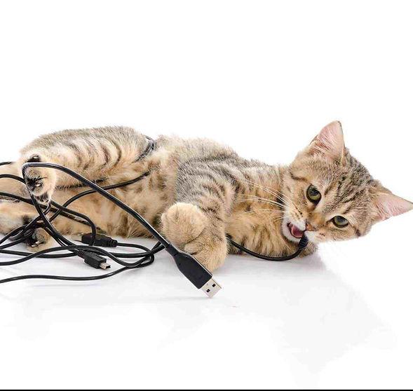 cat-chew-cords-e1522100480210.jpg