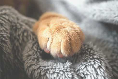 selective-photo-of-brown-pet-paw-1440406