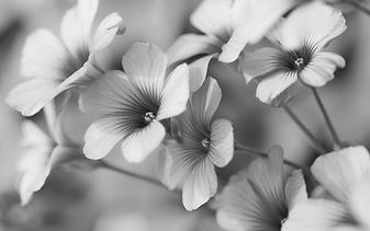 bloemenstralendjong.png