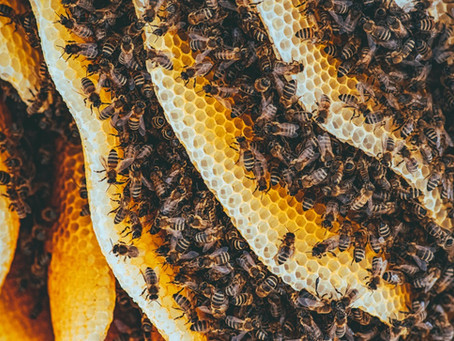The many uses of beeswax you never knew