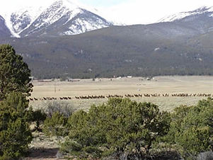 9-Game-Trail-Elk-Corridor1.jpg