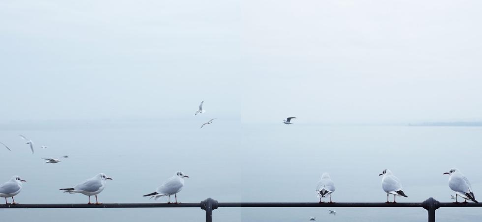 Birds at Bodensee, Rorscharch