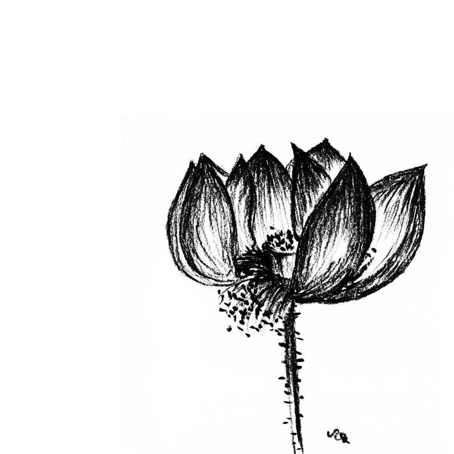 Broken lotus.
