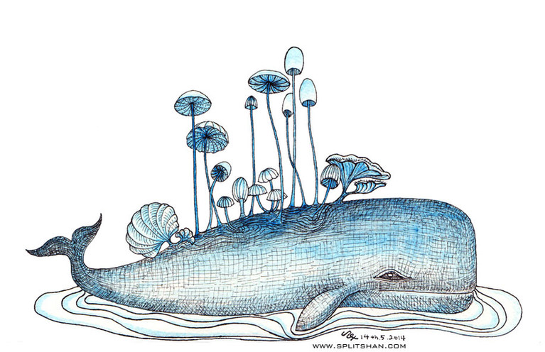 Whale and mushrooms
