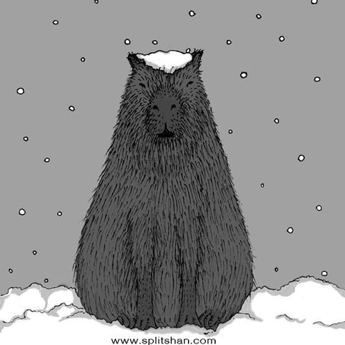 Capybara and Snow
