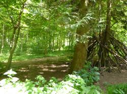 Friston Forrest1