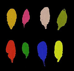 science colourful leaves.jpg